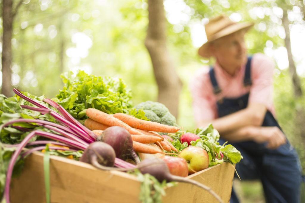 Senior farmer harvests organic vegetables for farmers market at Pepper Place
