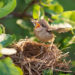 Enjoy Baby Bird Season at the Alabama Wildlife Center