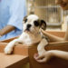 Find A Furever Friend At The Greater Birmingham Humane Society